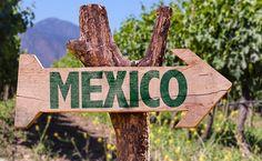Vinos mexicanos de pequeñas bodegas para celebrar a nuestro país: