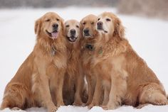 Dogs - I never had one, but the fact that they are in the world makes it happier for me. Love all dogs :-)