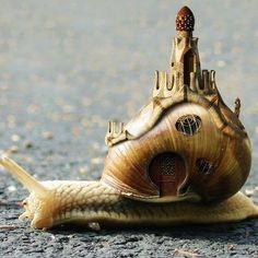 """Escargot - """"Non, je suis très lente."""""""