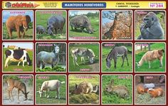 animales herbivoros