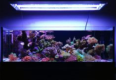 plainrt    Congratulations to community member plainrt and his 34 gallon nano reef aquarium for being selected for our October Reef Profile!  Below is the aquarium profile plainrt has written for us sharing his experiences in the hobby and hi...
