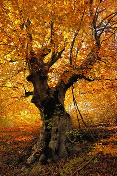 La Belleza del Otoño (The Beauty of Autumn)