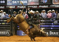 JB Mauney rides Bushwacker. Coyote Ugly, 8 Seconds, Bull Riders, Bad To The Bone, Cowboy And Cowgirl, Cowgirls, Country Life, Rodeo, Cowboys