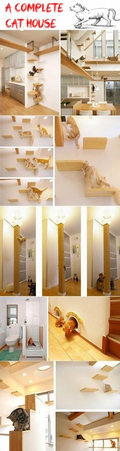 A Complete Cat House