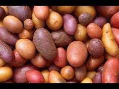Plant #potatoes with me from start to finish - here's how! #gardening  This show is brought to you by Harvest Barn Niagara on the Lake & Harvest Barn St Catharines: http://HarvestBarn.ca @HarvestBarnNOTL  * Subscribe to Cooking With Kimberly: http://cookingwithkimberly.com @CookingWithKimE #cwk