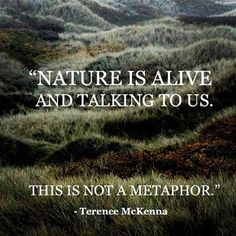 """The post """"Wild Nature Quotes Mother Earth Ideas"""" appeared first on Pink Unicorn quotes Mother Mother Nature Quotes, Mother Quotes, Terence Mckenna, One With Nature, Wild Nature, Nature Nature, Save Nature, Nature Study, Gaia"""