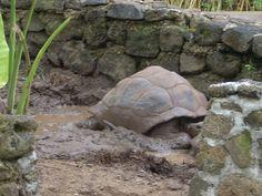Mauritius the oldest tortoise – wanaabeehere