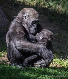 Beautiful Horses, Animals Beautiful, Cute Baby Animals, Animals And Pets, Animal Magic, Wild Dogs, Tier Fotos, Cute Animal Pictures, Orangutan