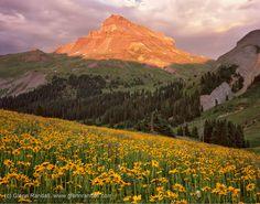 uncompahgre | Uncompahgre Peak at Sunset, Uncompahgre Wilderness, Colorado, flowers ...