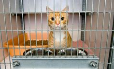 10 Reasons To Volunteer At An Animal Shelter   Care2 Healthy Living
