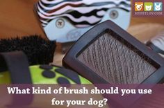 Slicker, Rakes, Pin or Bristle brushes? What kind of dog brush should you use for your dog? Well, here is a detailed guide on that with the proper way of brushing!