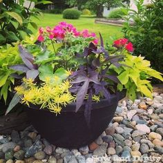 hanging baskets that last all summer long, flowers, gardening, perennials