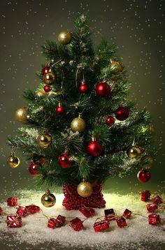 Хай різдвяна добра казка Подарує тепло й ласку, Хай різдвяні світлі зорі Знищать смуток весь і горе! Щастя, радість і добро Хай несе до вас Різдво! - Francisco Goya - Google+