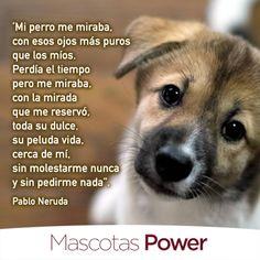 pablo-neruda-mi-perro-me-miraba-frase-pipeta-power-contra-pulgas-garrapatas-mosquitos-mascotaspower-laboratorios-brouwer-perros-gatos.png (678×678)
