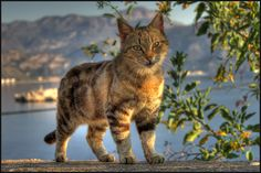 Just a cat by Paul Sirugo on 500px