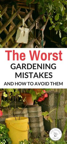 If your a beginner in the gardening world, check out these 10 worst gardening mistakes and how to avoid them.