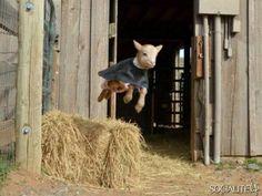 15 Cute Animal Pics - Wednesday, June 26, 2013