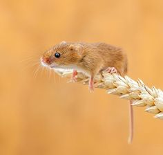 Mouse in the wild