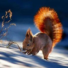 * (Red Squirrel) by Sergey Polyushko Animals And Pets, Baby Animals, Funny Animals, Cute Animals, Beautiful Creatures, Animals Beautiful, Reptiles, Mammals, Cute Squirrel
