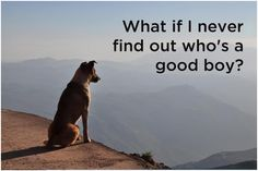 """Your dog wants to know who is that """"good boy"""", all what he thinks about is what if he never figured out who he is?"""