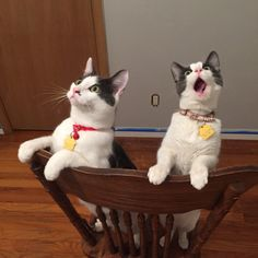 Cats' reaction to seeing the ceiling fan move for the first time.
