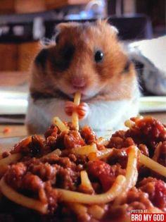 hamster and spaghetti  = amazing