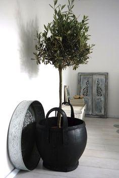 House of Philia: Indoor Olive Tree Indoor Olive Tree, Faux Olive Tree, Indoor Garden, Indoor Plants, Home And Garden, Indoor Outdoor, Planter Olivier, Growing Olive Trees, Growing Tree