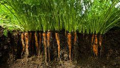 Hydroponic Growing, Hydroponic Gardening, Growing Grapes, Growing Plants, Gardening Supplies, Gardening Tips, Commercial Aquaponics, Aquaponics Fish, Hydroponics System