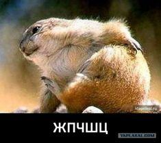 """Смешные картинки с надписями Афоризмы  исторических людей. Лучшее только <a href=""""http://www.trumpick.org"""">тут</a>"""