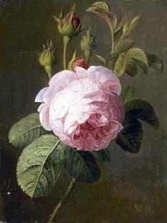 A Rose - Christiaen Van Pol