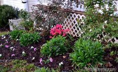 cleaning out the flower beds + saving money with Perennial plants