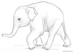 How to draw a baby elephant step by step. Drawing tutorials for kids and beginners.