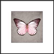 Posters med fotokonst, Flamingo 50x50cm tavla