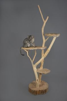 Catlounge naturel cat tree