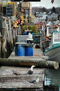 Lobster Life - Portland, Maine
