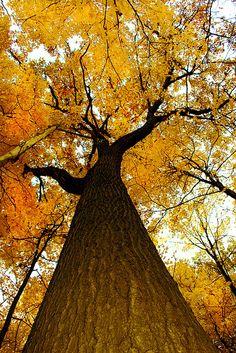 Tree Woman by eliciaire, via Flickr.  Autumn in Ontario, Canada.