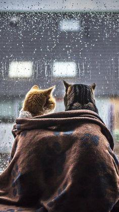 Es regnet.... aber wir beide haben es schön warm!