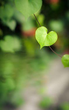 heart shaped leave