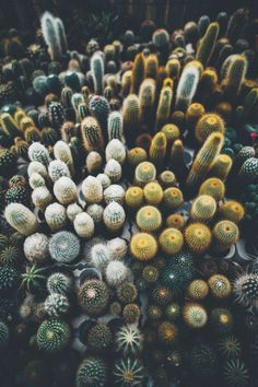 { aerial view of a succulent city }