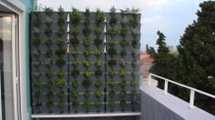 Have a balcony or terrace and need privacy?  Don't worry- it'll grow on your neighbors! www.wallgarden.ca