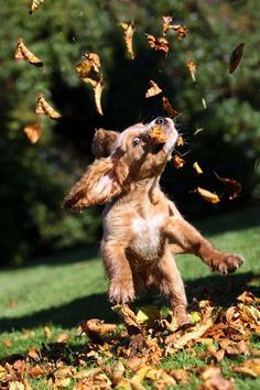 Even dry leaves can be exciting when your a puppy that's full of beans