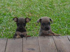 meus cachorrinhos, minhas paixões <3