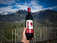 Siamo partiti per portare i vini di Pomaio in giro per il mondo, la prossima tappa?#Drinkme #trentino