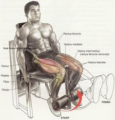 """Leg Extensions """"Bad"""" for Your Knees? Biceps Workout, Gym Workouts, Tummy Workout, Chest Workouts, Leg Routine, Quad Exercises, Workout Posters, Weight Training, Excercise"""