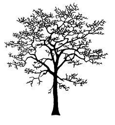 Dogwoods for TN/GA  http://tidcf.nrcan.gc.ca/images_web/imfc/arbres/dessins/moyen/GR08_Cornus_nut_silhouette.gif
