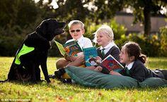 Labrador Retriever- raças de cachorros para crianças