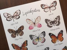 Butterfly Art print // Creatures of Lepidoptera // Butterfly Scientific Illustration Types Of Butterflies, Plant Illustration, Butterfly Art, Creatures, Colours, Illustrations, Art Prints, Poster, Painting