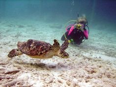 About the Program : Marine Biology : Biology : College of Arts and Sciences : Barry University, Miami Shores, Florida
