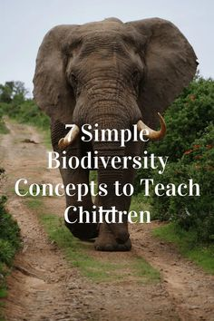 biodiversity lesson plan | earth friendly concepts for children | unschooling | homeschooling | ecofriendly | activism | lesson plans | lessons | science Minimalist Parenting, Minimalist Lifestyle, Most Endangered Animals, Living And Nonliving, Ozone Layer, Greenhouse Effect, Physical Environment, Natural Parenting, Eco Friendly House