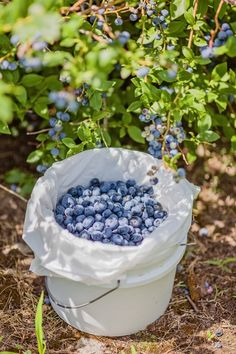 How to grow buckets full of blueberries no matter where you live 50 stunning diy spring decoration ideas for your yard and garden decoration diy garden ideas spring stunning yard Home Vegetable Garden, Fruit Garden, Edible Garden, Garden Plants, Veggie Gardens, Outdoor Gardens, Farm Gardens, Garden Totems, Flowering Plants
